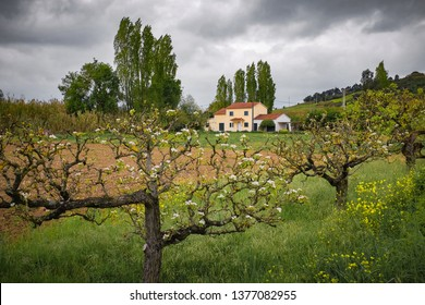 Beautiful and flowery countryside with a house in a distance on a cloudy Spring day