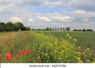 beautiful flowery field margin with poppies, cornflowers, rye, mustard and phacelia along a farmland with young onion plants and blue sky with clouds in the background