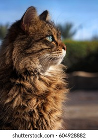 Beautiful fluffy cat in the sunlight