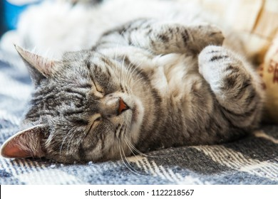 The beautiful fluffy cat of tabby sleeps on the sofa