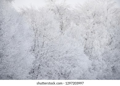Beautiful fluffy frost on the branches of trees on a frosty sunny day. Beautiful natural winter phenomenon.Beautiful natural winter phenomenon.