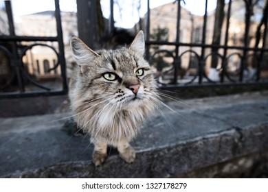 Beautiful fluffy gray cat on the street