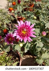 beautiful flwoer blooming in garden