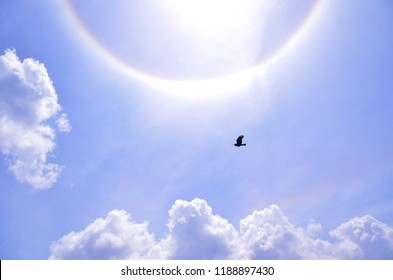 The beautiful flying black bird flying freely under the half circular Halo sky, white and rainbow colors rounded the sun. The optical phenomenon.