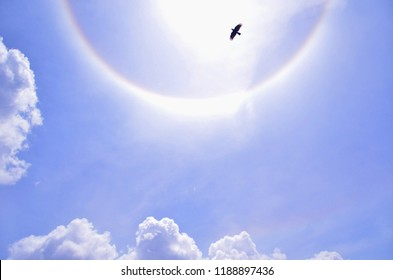 The beautiful flying black bird spreading his wings freely under the half circular Halo sky, white and rainbow colors rounded the sun. The optical phenomenon.