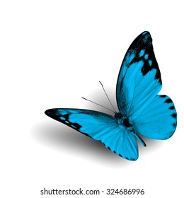 The beautiful flying blue butterfly with fine shadow on white background