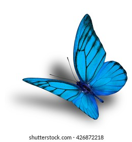 Beautiful flying fancy pale blue butterfly isolated on white background with soft shadow beneath