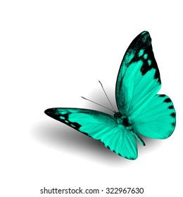The beautiful flying green butterfly with fine shadow on white background