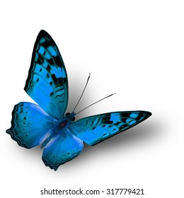 The beautiful flying light blue Butterfly (Vagrans egista, nymphalid) Vagrant in fancy color profile on white background with soft shadow