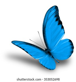 Beautiful flying light blue butterfly on white background with soft shadow, chocolate albatross butterfly in fancy color profile