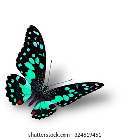 The beautiful flying light green butterfly, Lime butterfly in fancy color profile on white background with soft shadow