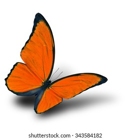 Beautiful flying orange butterfly with soft shadow on white background, the blue morpho in fancy color profile