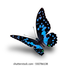 Beautiful flying pale blue swallowtail butterfly, Lime or Lemon in fancy color fully wings stretched on white background over soft shadow