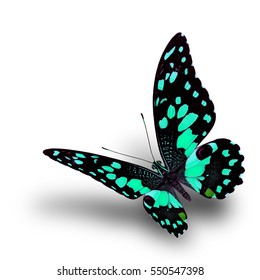 Beautiful flying pale green swallowtail butterfly, Lime or Lemon in fancy color fully wings stretched on white background over soft shadow