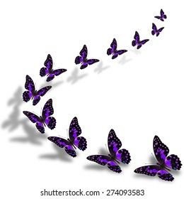 Beautiful flying purple butterflies in a great series of taking off with nice shadow beneath