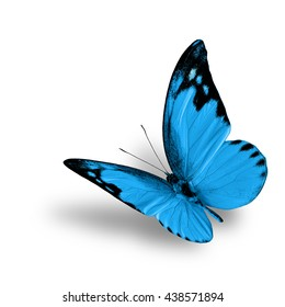 The beautiful flying turquoise blue butterfly, fancy buttefly with fine shadow beneath on white background
