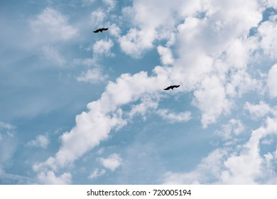 Beautiful flying two hawks in the sky, south France