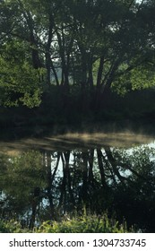 Beautiful fog by the river in the shade of trees