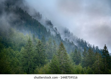 Beautiful foggy and cloudy mountain forest landscape.