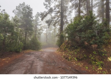 Beautiful foggy forest in Arenas Negras, Tenerife, Canary islands, Spain.