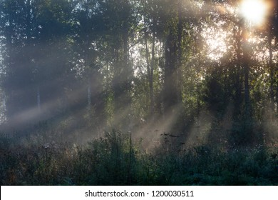 Beautiful foggy forest landscape in Finland. It is autumn and the sun shines. Sun rays are visible between the trees.
