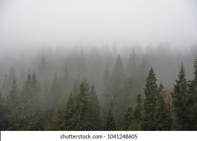 Beautiful foggy forest landscapes in mountains