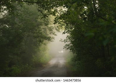 Beautiful foggy moody landscape of early morning nature. Old countryside outback road dissapearing in distance in fog and green trees. Horizontal color photography.