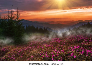 Active Shirts & Tees Fashion Printed T-Shirts Summer Sunrise in The Mountains with Rolling Hills and