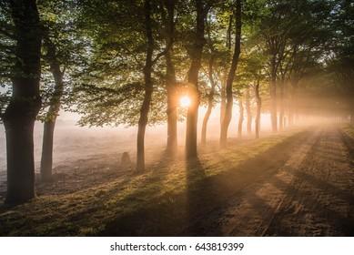 Beautiful  foggy sunrise in National park Veluwe