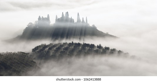 Beautiful foggy sunrise in Tuscany, Italy with vineyard and trees. Natural misty background in black and white