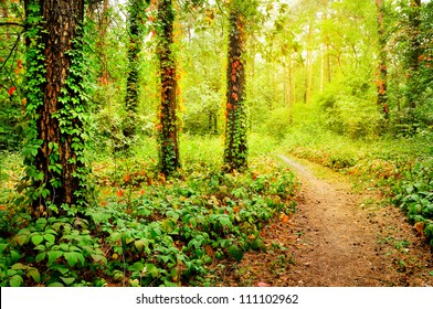 Beautiful foot path in the colorful autumn forest illuminated by morning sun