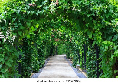 Beautiful footpath in the garden. The walk way with camber colorful flowers and trees background.