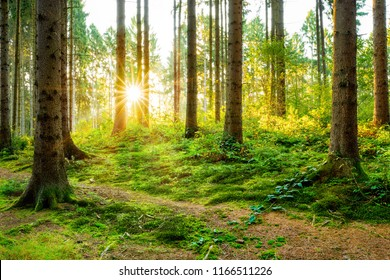 Beautiful forest in autumn with bright sun shining through the trees