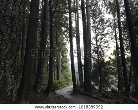 Beautiful Forest Background Stock Photo Edit Now 1018389052