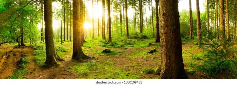 Hermoso bosque con sol brillante a través de los árboles