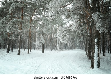 Beautiful forest covered with snow in winter - Shutterstock ID 1919693966