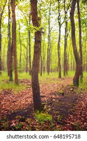 Beautiful forest with curvy tree trunks
