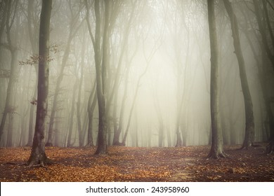 Beautiful forest during an autumn foggy day