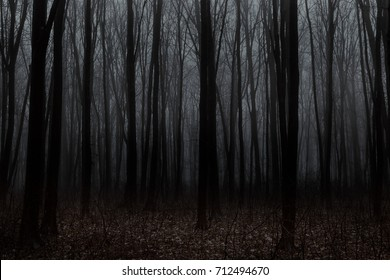 Beautiful forest with fog. Beauty nature background - Shutterstock ID 712494670