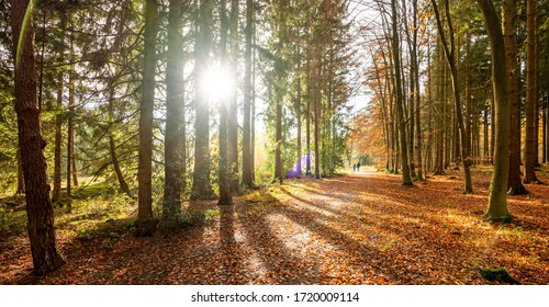 Beautiful Forest in golden autumn with beautiful bright sun rays - wanderlust