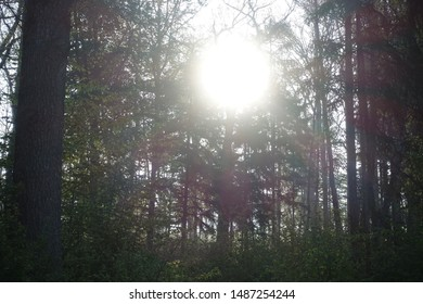 Beautiful forest landscape in Bavaria Germany with greenery and nature
