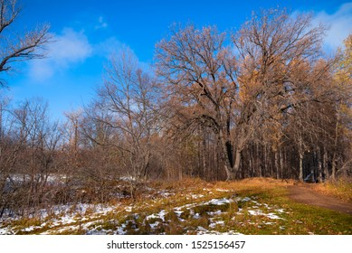 Beautiful forest landscape - the first snow on the earth in the foreground and an oak tree with bare branches on the path leading to the forest, autumn, early winter