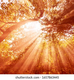 Beautiful forest landscape.  The sun's rays make their way through the leaves of trees in a garden or wild forest at sunset or sunrise in summer or autumn.