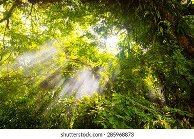 beautiful forest in the morning, light