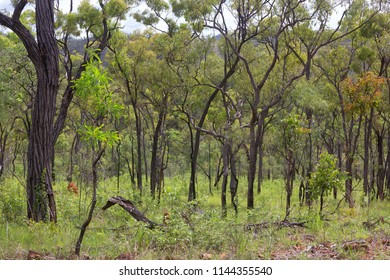 Beautiful forest near Irvinebank on the Atherton Tableland in Queensland, Australia