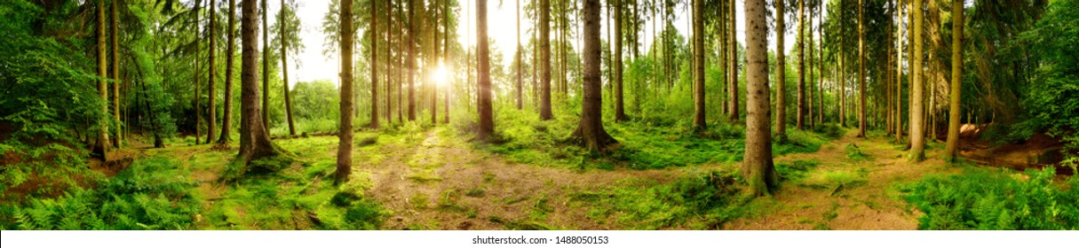 Beautiful forest panorama with bright sun shining through the trees - Shutterstock ID 1488050153