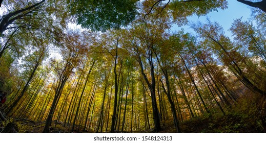 Beautiful forest panorama at Lazarev kanjon (Serbia)