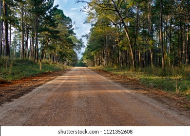 Beautiful forest road in the Texas Sam Houston National Forest.