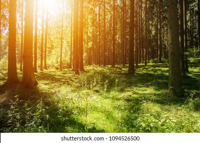 Woods Background Images Stock Photos Amp Vectors Shutterstock