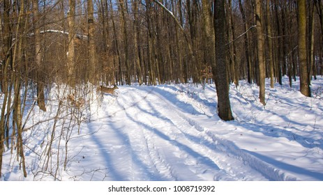 Beautiful forest snow view , brown young deer running